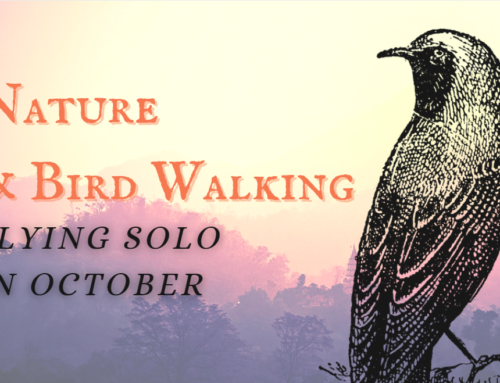 Nature & Birding Walks – Flying Solo in October!