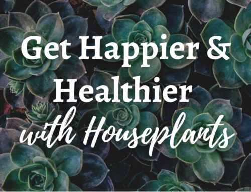 Get Happier and Healthier with Houseplants!