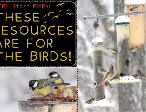 CCPL Staff Picks: These Resources are for the Birds!