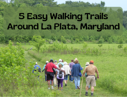 5 Easy Walking Trails Around La Plata, Maryland