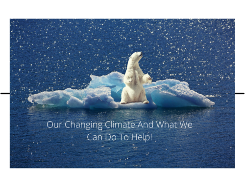 Climate Change: How Each of Us Can Do Our Part to Help!