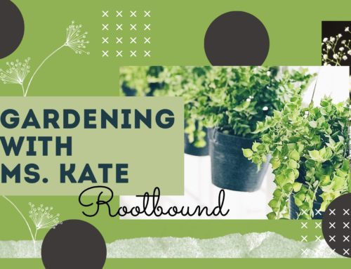 Gardening with Ms. Kate Ep. 6: Rootbound
