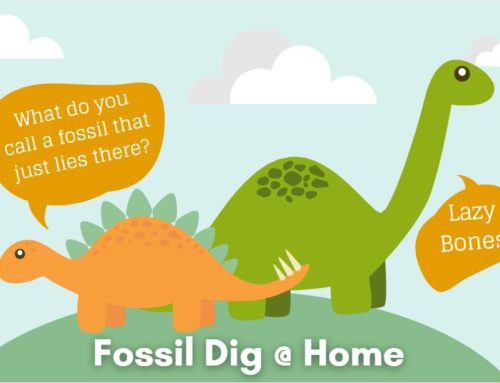 Fossil Dig @ Home