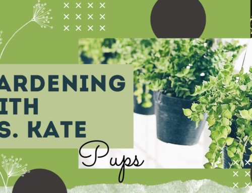 Gardening with Ms. Kate – Ep. 7: Pups