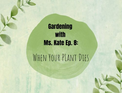 Gardening with Ms. Kate Episode 8: When Your Plant Dies